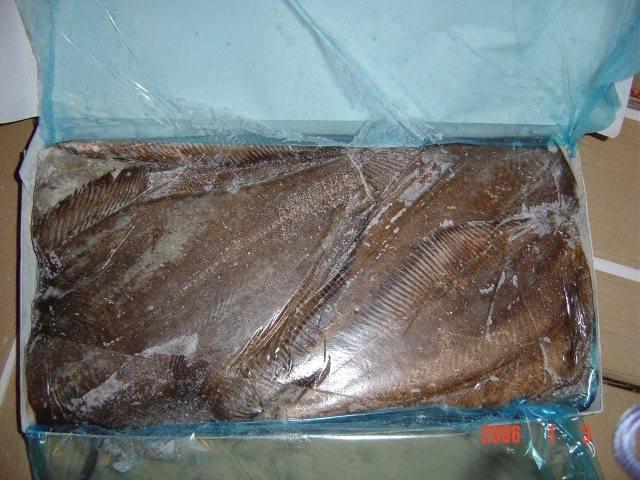 HALIBUT TUSZA 1-2kg a'20kg